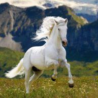 6. Có nên mua quà tặng tượng ngựa hay không. 1