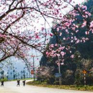 Mùa hoa đào Hà Giang2